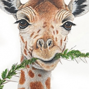 Laurie T. Walker Giraffe with Sprig