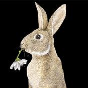 Rabbit Standing by Laurie Walker