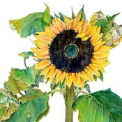 Sunflower by Beverly Berhens
